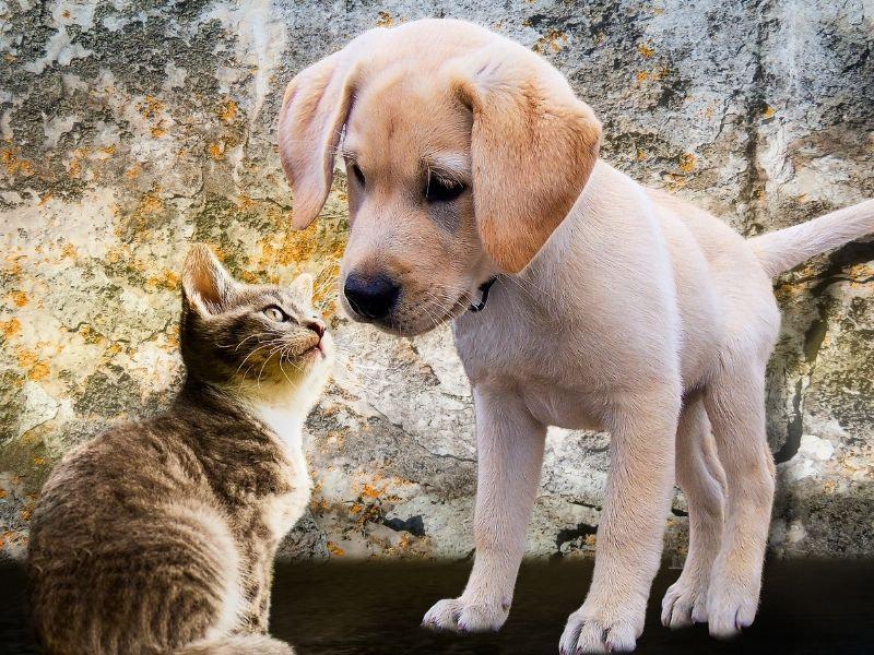 Tierpflege für Hunde & Katzen – auf diese Zusätze solltest du achten