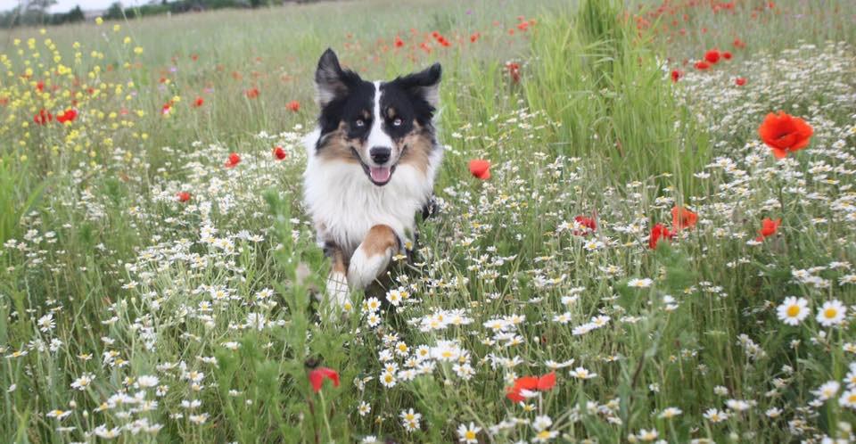 Mit deinem Hund in den Frühling