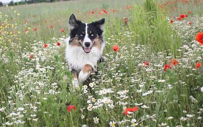 Hunde: Alles rund um die Zecke