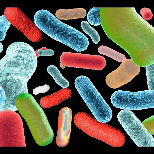 Mehr zu Mikroorganismen
