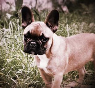 Lady – Allergie Hund füttern