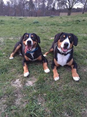 Karlos und Balou – BARF Ergänzung und Zeckenschutz