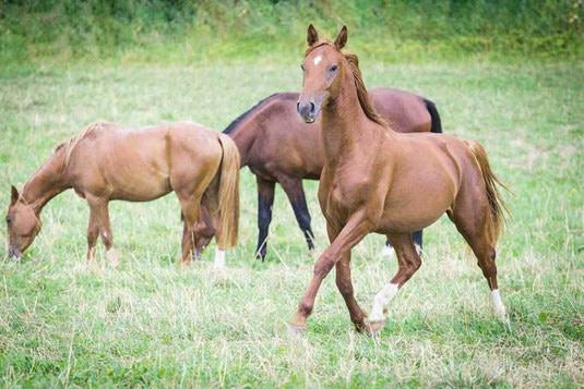 Serie Pferde gesund erhalten – Atemwege