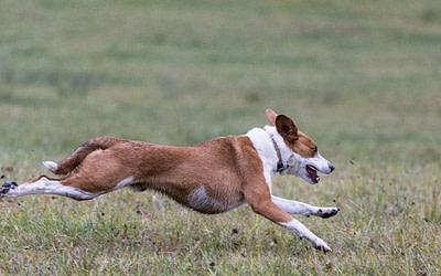 Hunde: Beschwerden im Bewegungsapparat, Fütterung & Darm