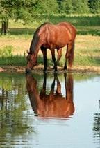 Wasser, das wichtigste Grundnahrungsmittel des Pferdes