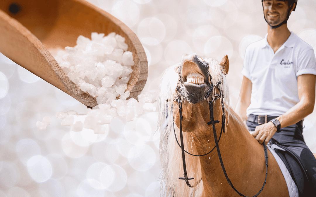 Salz: lebenswichtiges Elektrolyt für Pferde