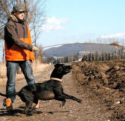 Fitness für Hund & Mensch
