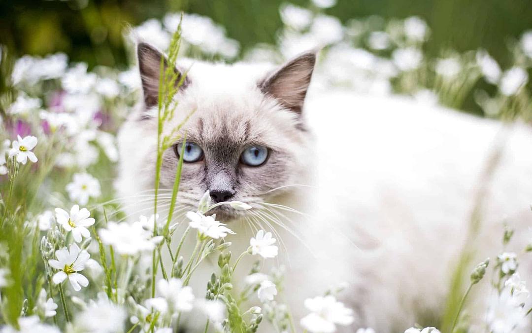 Katze – wirklich ein Einzelgänger?