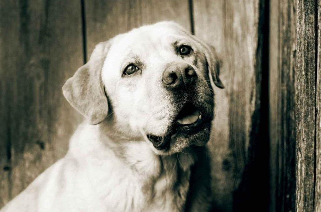 Seniorenhunde – Fütterungstipps