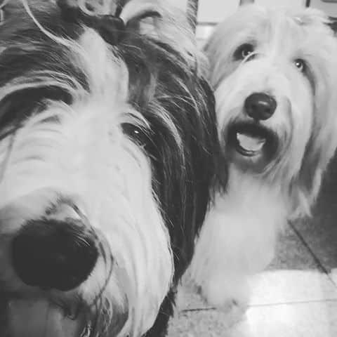 Hunde Fit durch den Fellwechsel