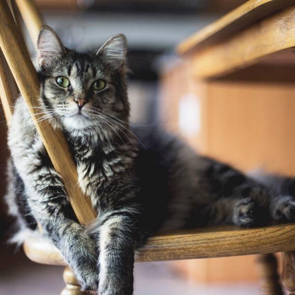 Betsi – Untergewicht, Seniorin