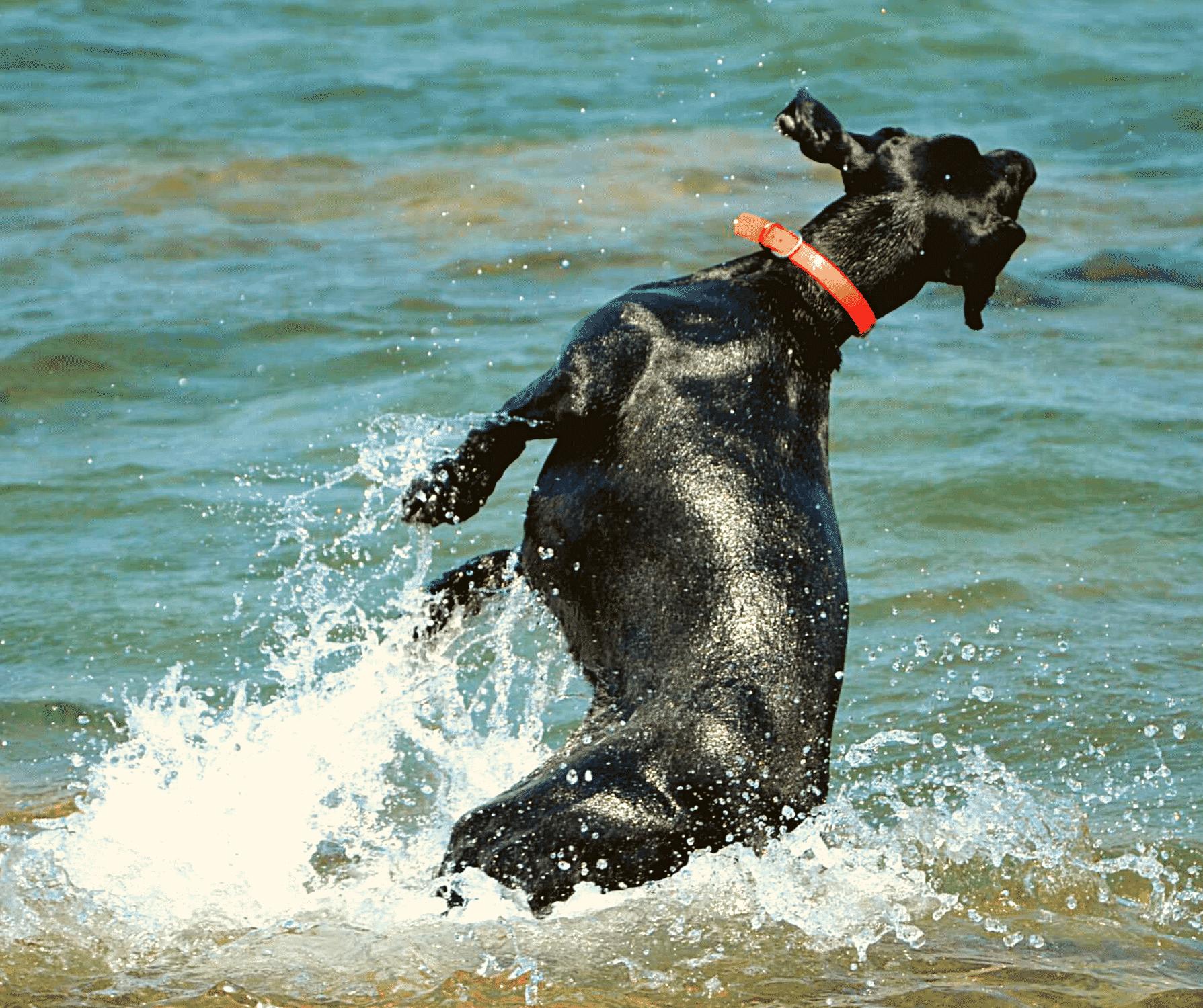 Hunde: Hitze & Kühlung, so kannst du helfen