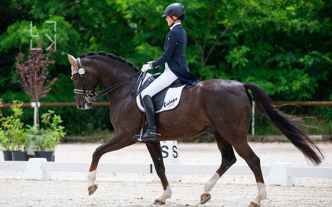 Diavolo – Grand Prix Pferd, Beweglichkeit