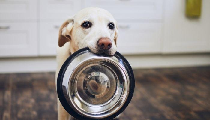 Fermentierte Säfte für Hunde
